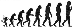 silhouettes of human evolution
