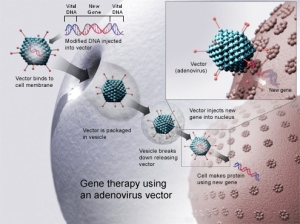Illustration of virus delivering genes to a cell