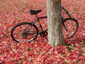 Black bike leaning against a tree
