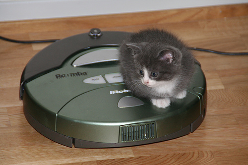 A kitten on a roomba